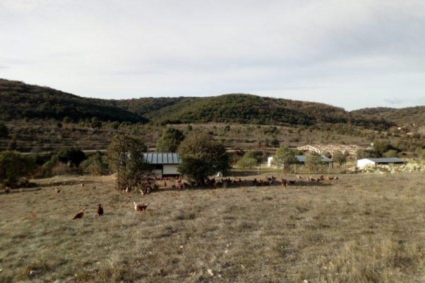 ferme biologique le chant des collines à Lagorce en Sud Ardèche