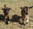 parc animalier de Lussas Ardèche