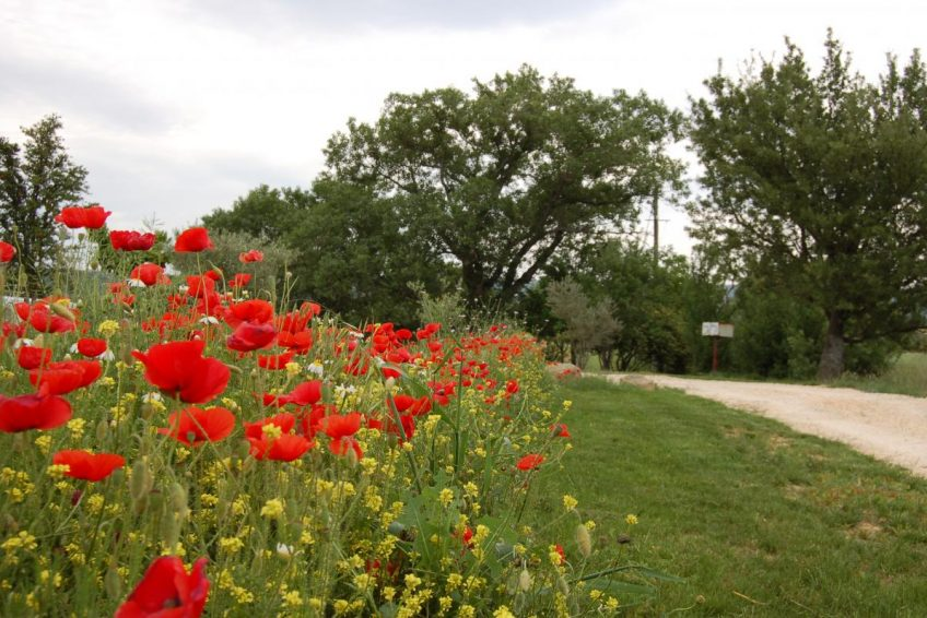 Réservez votre location de vacances 6 personnes avec piscine au gîte le Mûrier à Bessas en Sud Ardèche