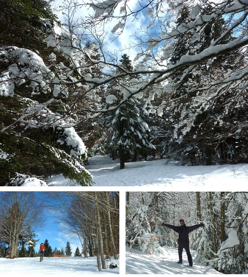 Ardèche randonnée en raquette - bois de Bauzon