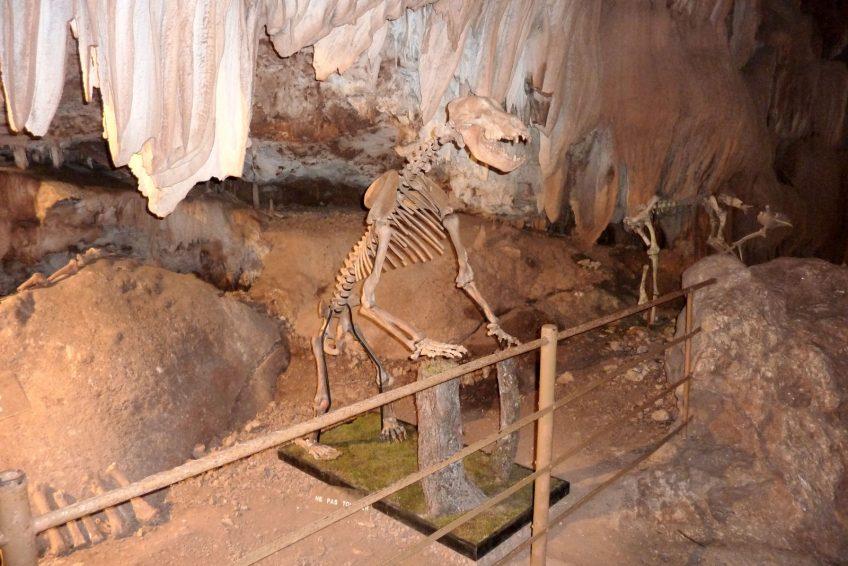 grotte Ardèche - Aven Marzal - ours des cavernes en Ardèche