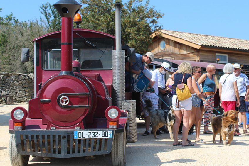 Musée de la lavande en Ardèche : tout du domaine Lavandaïs en petit train